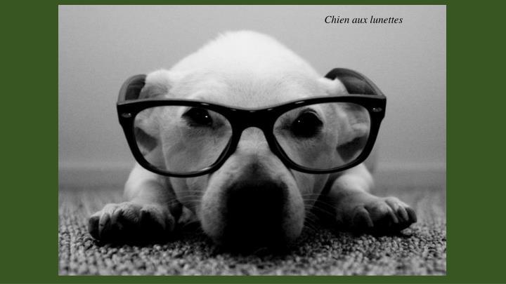 Chien aux lunettes