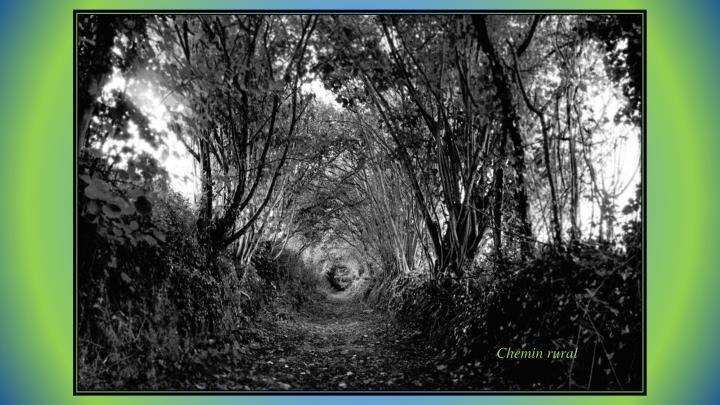Chemin rural