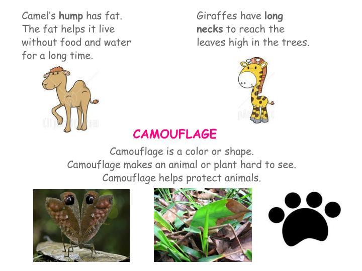 Giraffes have