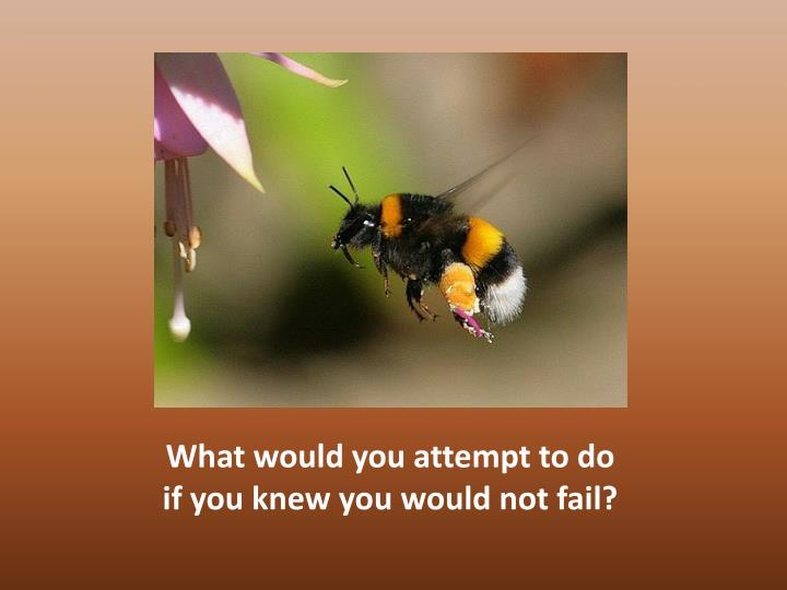 What would you attempt to do if you knew you would not fail?