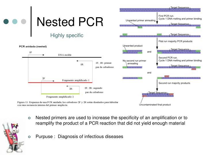 ppt pcr polymerase chain reaction powerpoint