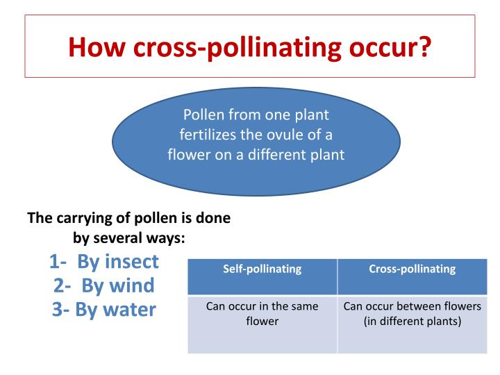 How cross-pollinating occur?