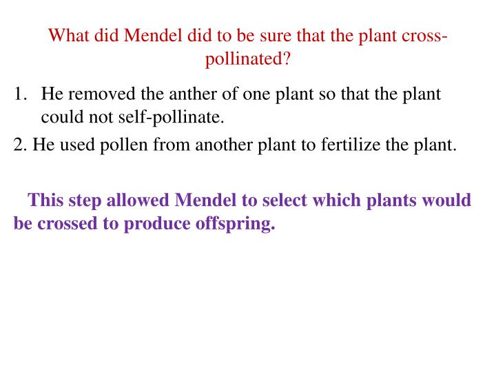 What did Mendel did to be sure that the plant cross-pollinated?