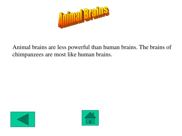 Animal Brains