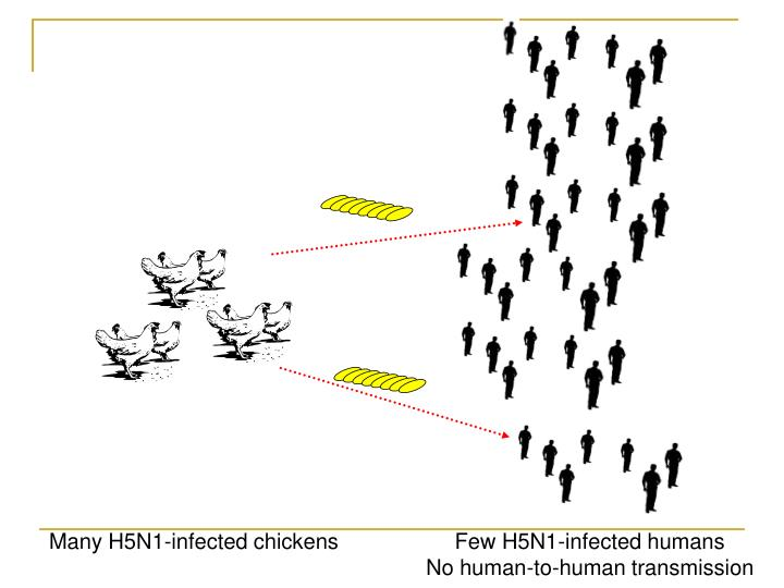 Many H5N1-infected chickens