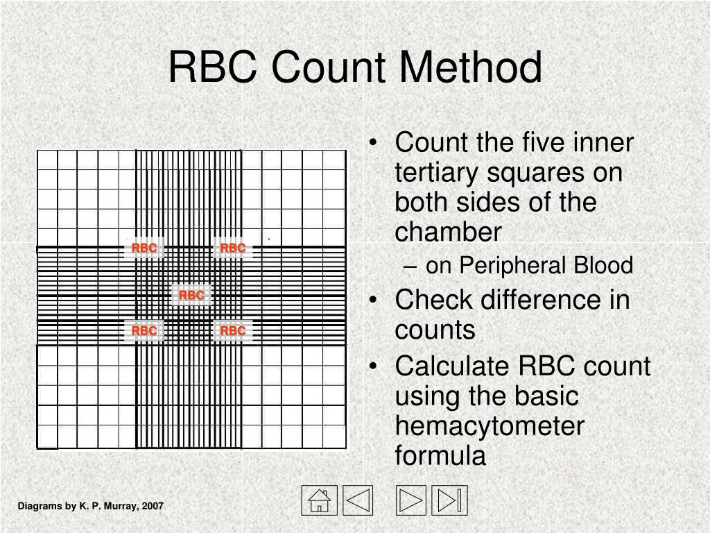 PPT - Hemacytometer and Manual Cell Counts PowerPoint