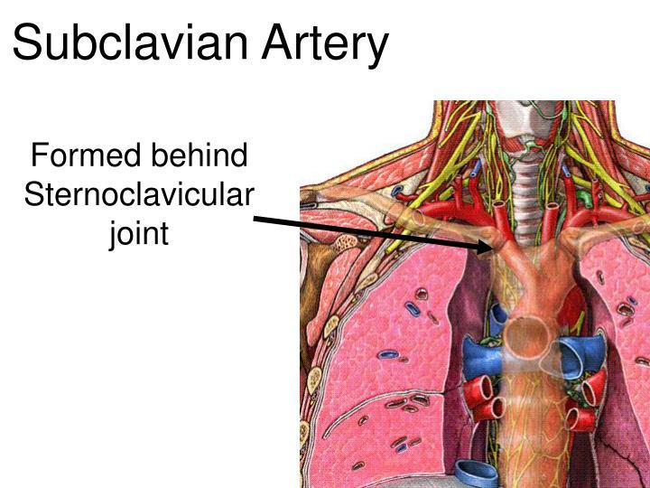 PPT - Vascular Anatomy PowerPoint Presentation - ID:4936605