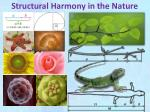 structural harmony in the nature