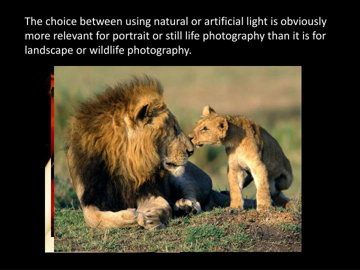 The choice between using natural or artificial light is obviously more relevant for portrait or still life photography than it is for landscape or wildlife photography.