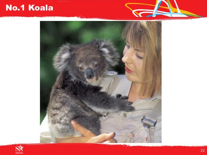 No.1 Koala