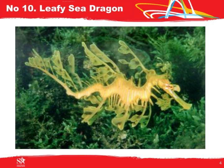 No 10. Leafy Sea Dragon