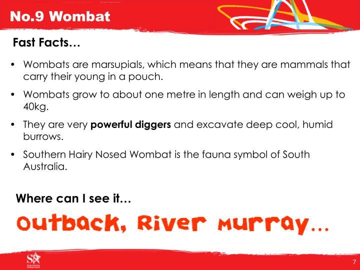 No.9 Wombat
