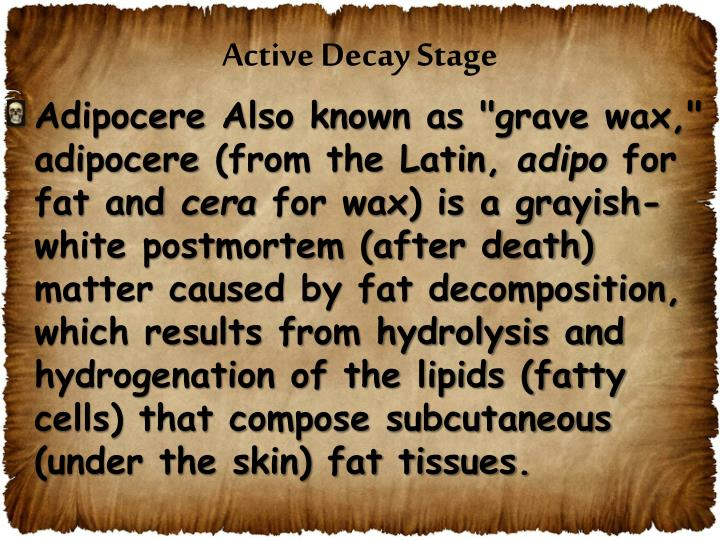 Active Decay Stage