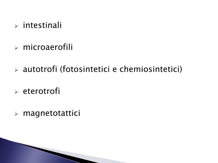 intestinali