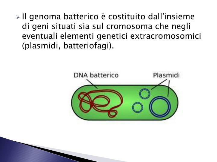 Il genoma batterico è costituito dall'insieme di geni situati sia sul cromosoma che negli eventuali elementi genetici extracromosomici (plasmidi, batteriofagi).