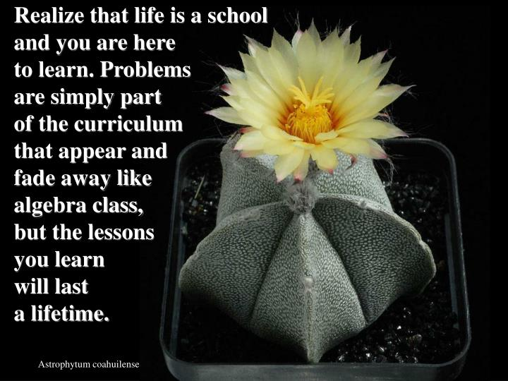 Realize that life is a school