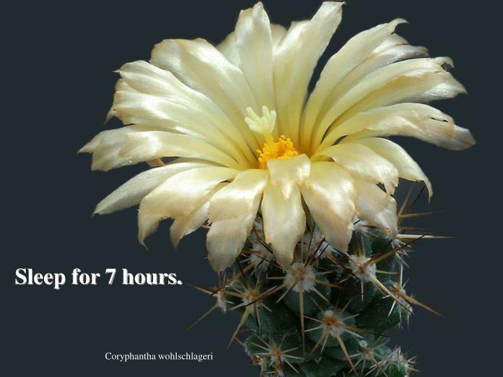 Sleep for 7 hours.