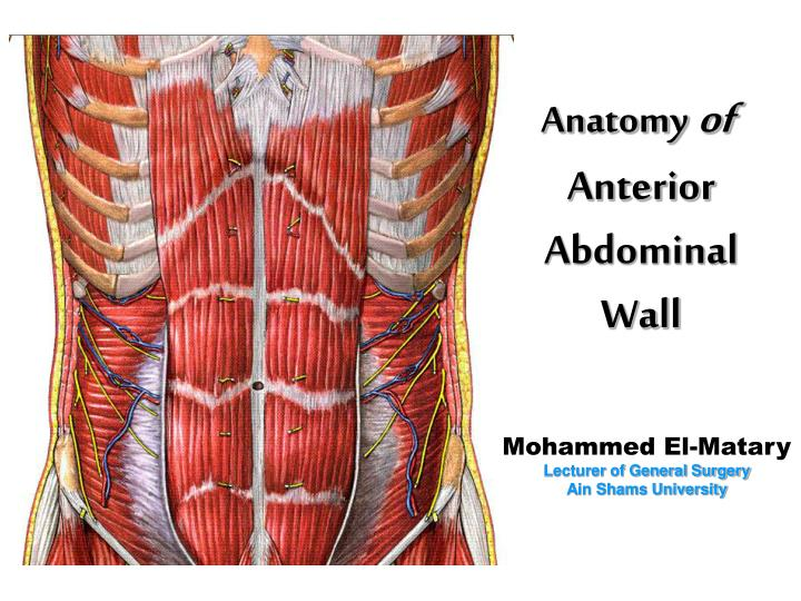 Ppt anatomy of anterior abdominal wall powerpoint presentation anatomyof anterior abdominal wall ccuart Image collections