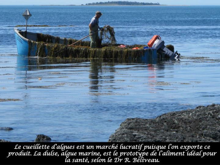 Le cueillette d'algues est un marché lucratif puisque l'on exporte ce produit. La dulse, algue marine, est le prototype de l'aliment idéal pour la santé, selon le Dr R. Béliveau.