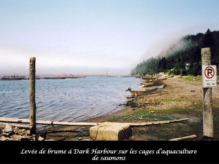 Levée de brume à Dark Harbour sur les cages d'aquaculture de saumons