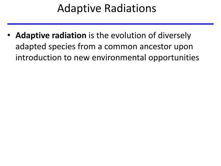 Adaptive Radiations