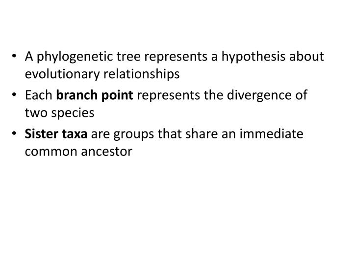 A phylogenetic tree represents a hypothesis about evolutionary relationships
