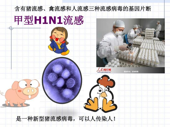 含有猪流感、禽流感和人流感三种流感病毒的基因片断