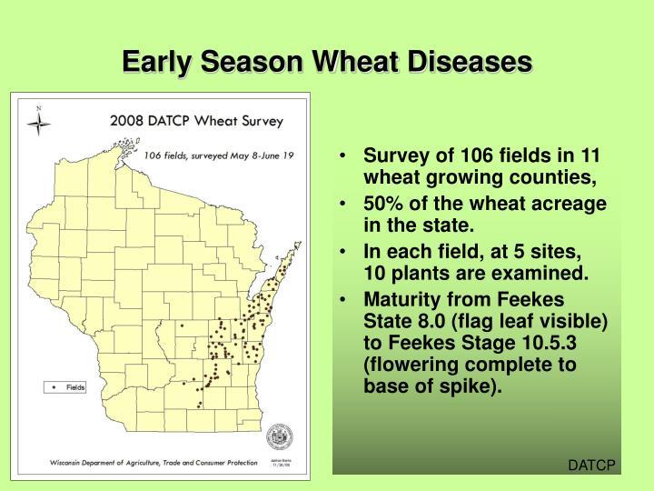 Early season wheat diseases