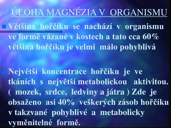 ÚLOHA MAGNÉZIA V  ORGANISMU