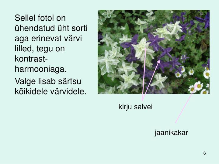 Sellel fotol on ühendatud üht sorti aga erinevat värvi lilled, tegu on kontrast-harmooniaga.