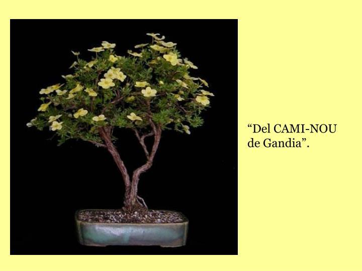 """""""Del CAMI-NOU de Gandia""""."""