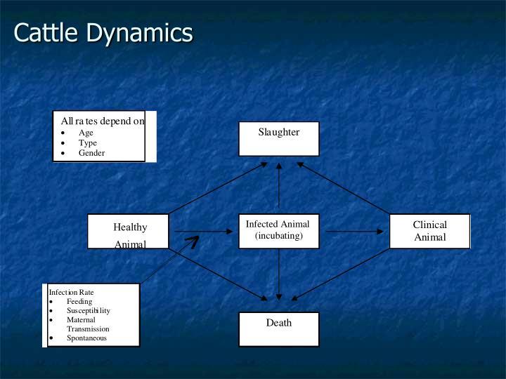 Cattle Dynamics