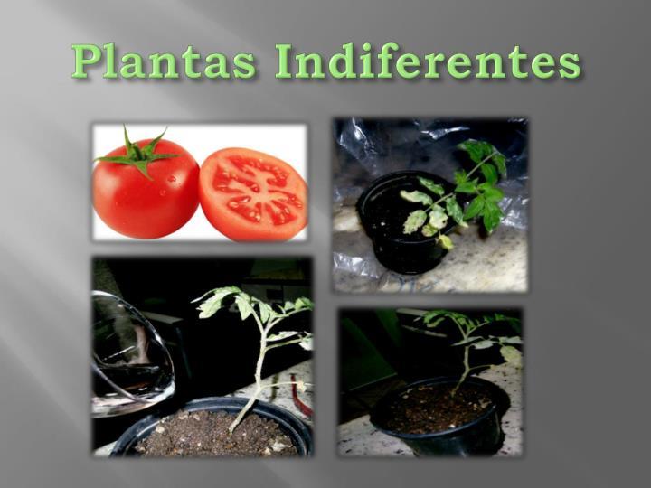 Plantas Indiferentes