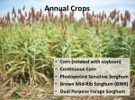 annual crops