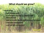 what should we grow