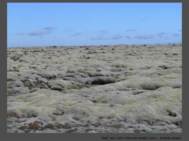 """תופעה מיוחדת – טחב המכסה את סלעי הלבה כמו """"מוס"""""""