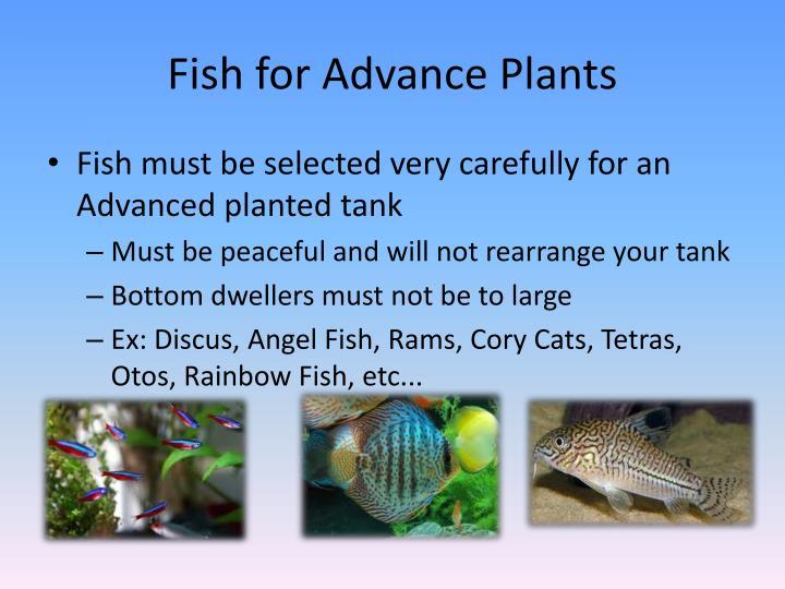 Fish for Advance Plants