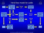 herd flow model for cattle