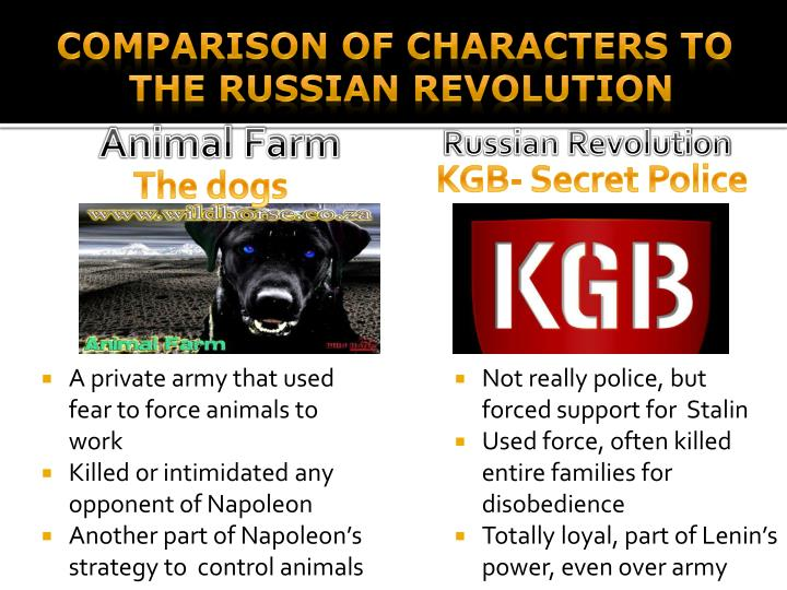 comparison of animal farm to stalinistic Topic: research the life of karl marx what were the fundamentals of his communist manifesto and how do they compare to the ideas expressed by old major in animal farm.