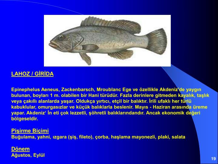 LAHOZ / GİRİDA