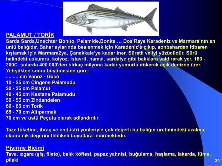 PALAMUT / TORİK
