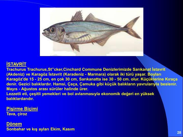 İSTAVRİT