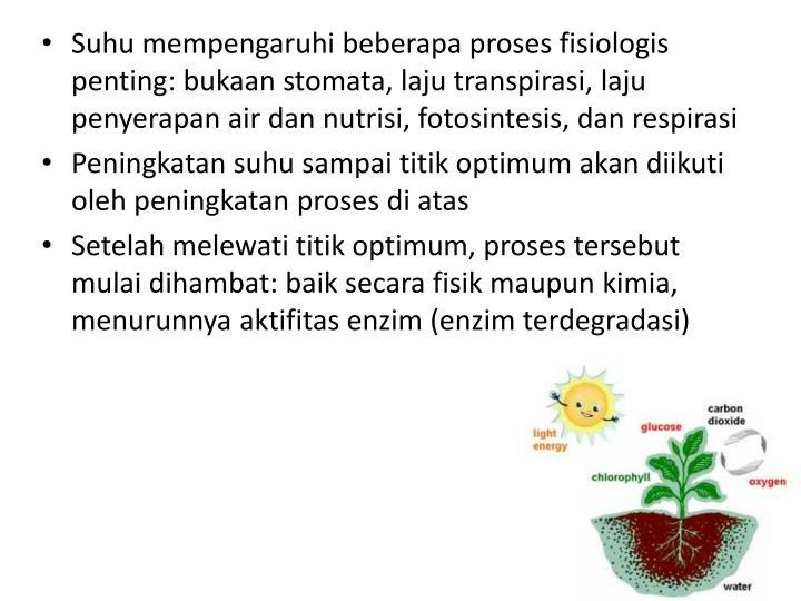 Suhu mempengaruhi beberapa proses fisiologis penting: bukaan stomata, laju transpirasi, laju penyerapan air dan nutrisi, fotosintesis, dan respirasi