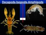 decapods isopods amphipods