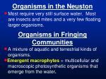 organisms in the neuston