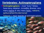vertebrates actinopterygiians