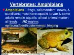 vertebrates amphibians