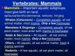vertebrates mammals