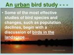 an urban bird study