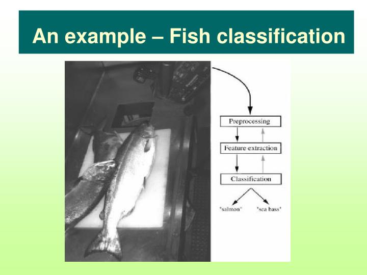 An example – Fish classification